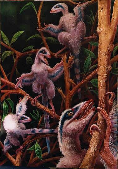 Ces microraptors possédaient 4 ailes et vivaient dans les arbres